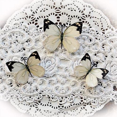 Delicate Beauty Premium Paper Glitter Glass Butterflies