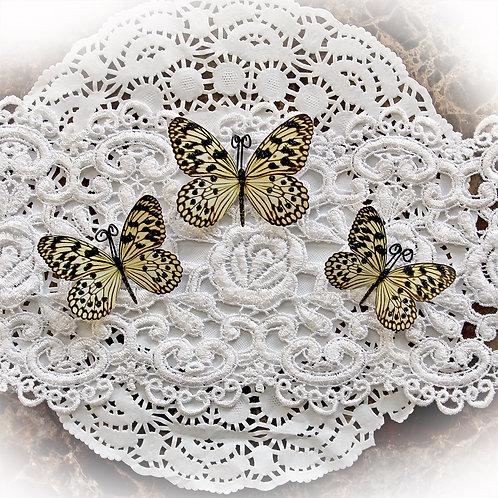 Reneabouquets Butterfly Set~Glamorous Premium Paper Butterflies