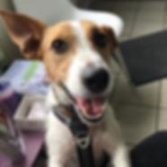 Yay! So happy to go to the vet 🐶_.jpg