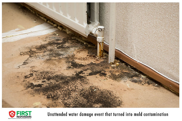 Water Damage. Water Leak. Mold contamination. Mold First Responders.
