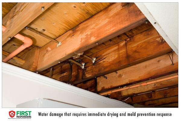 Water Damage. Water Leak Mold Prevention. Mold Remediation. Mold Consulting. Mold First Responders.