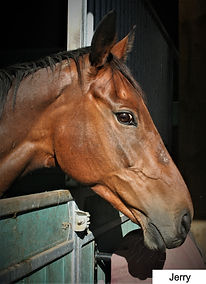 Rehoming%20a%20racehorse_edited.jpg