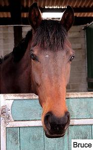 Racehorse rehab