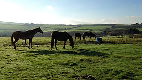 Cornwall rehome horses racehorses