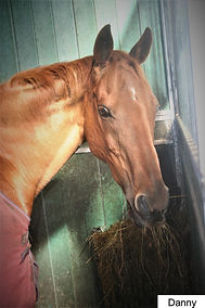 ex racehorse cornwall