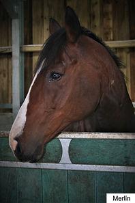 cornwall horses