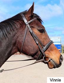 Final venture paul midgley horse racing