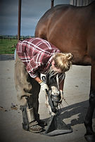 Racehorse trimmer