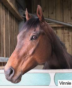 Final venture racehorse