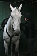 racehorse tack
