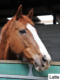 Rehoming horses