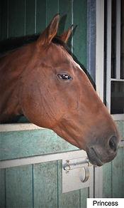ex-racehorse southwest