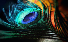 green-and-blue-peacock-feather-674010_ed