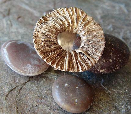 "Bronze Ring ""OceanFungus"" (round)"
