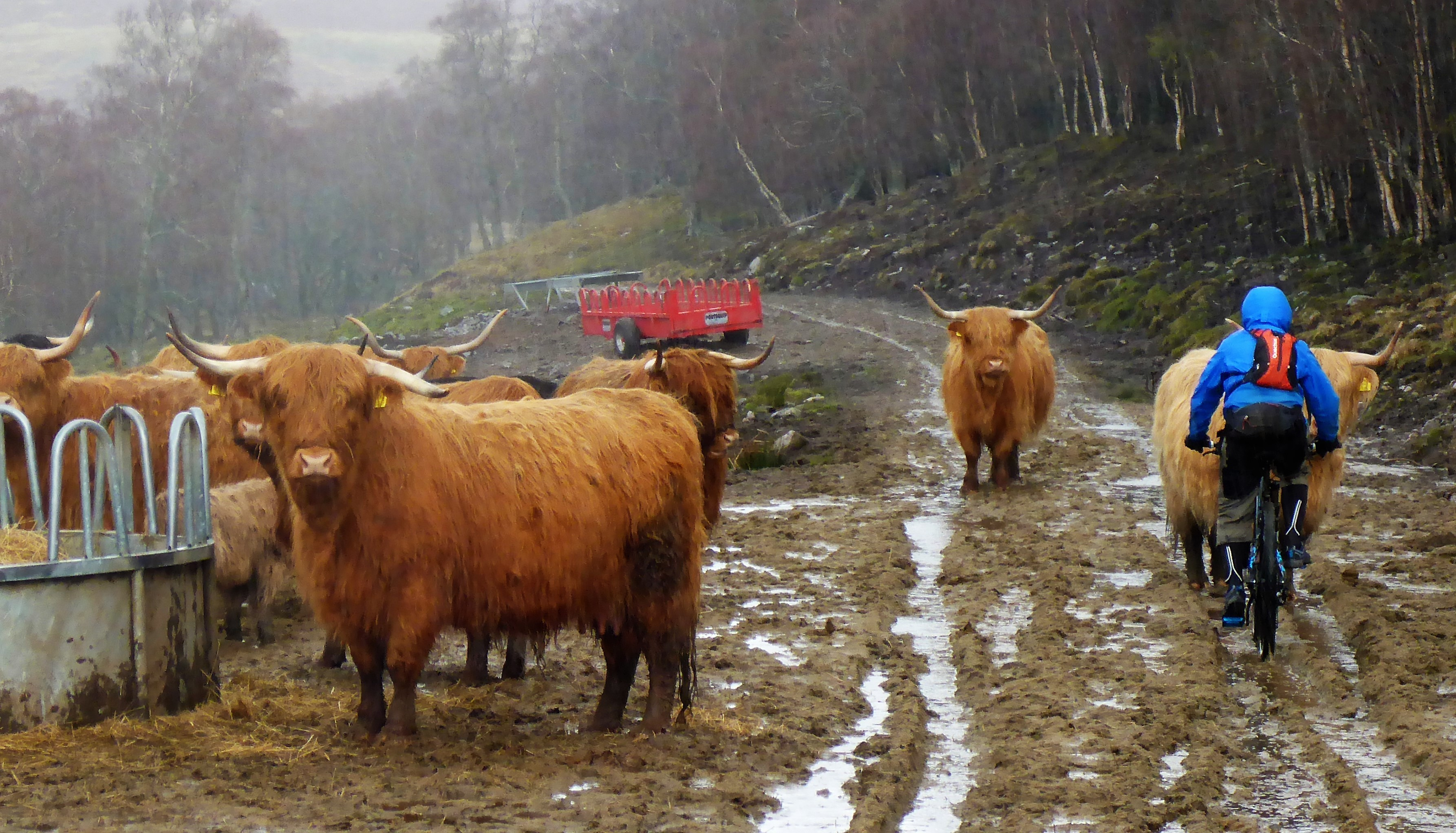 Traffic problems Gleann Mhor
