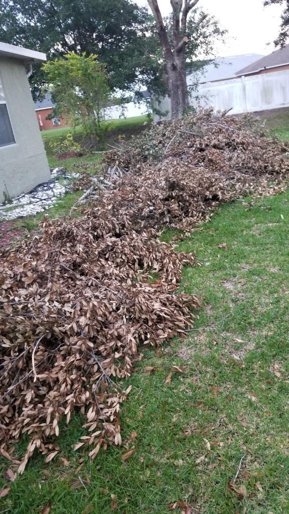 Tree Removal Job