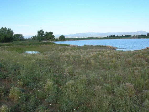 Wetland 2.jpg