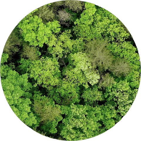 treeglobe.png