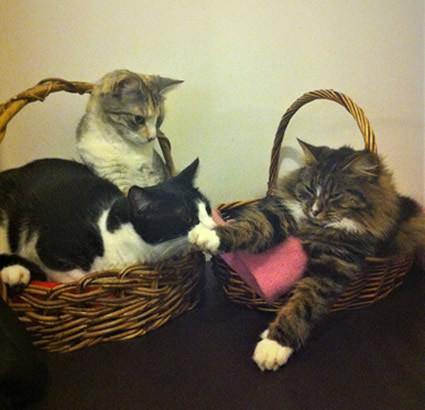 Merri, Pippin and Daisy