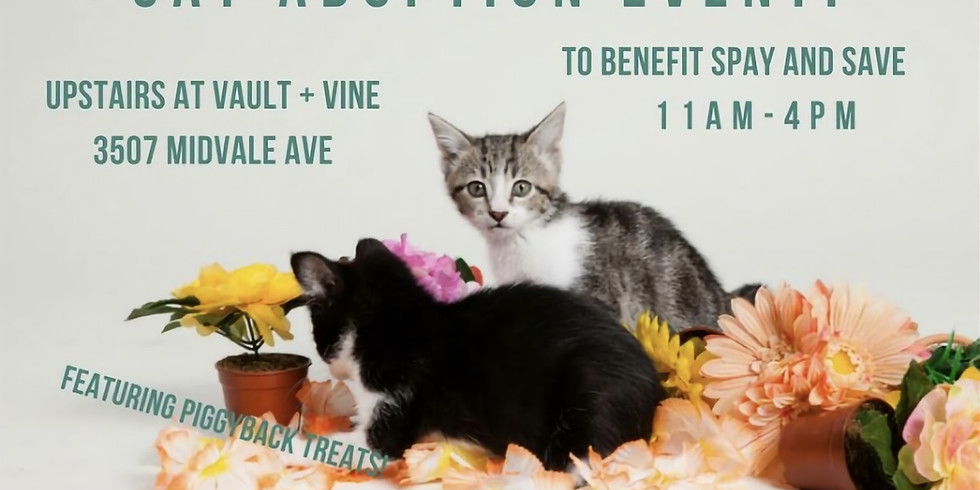 Cat Adoption Event at Vault & Vine