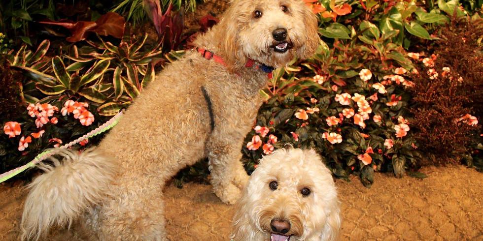 Fido Friday at the Philadelphia Flower Show!
