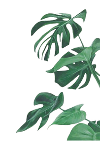kisspng-watercolor-painting-leaf-botanic