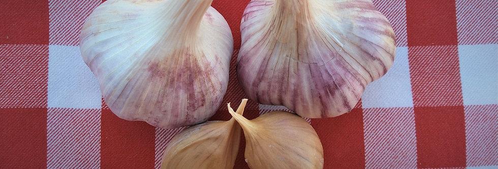Metechi - Marbled Purple Stripe - Hardneck
