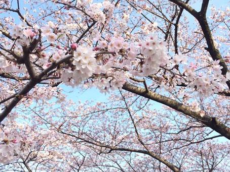 🌸春の到来です🌸