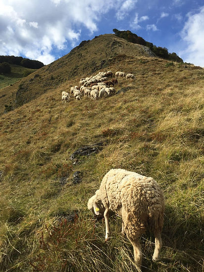 laine de pays, française, tissage origines