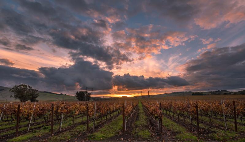 Sonoma Vines Sunset-2075.jpg