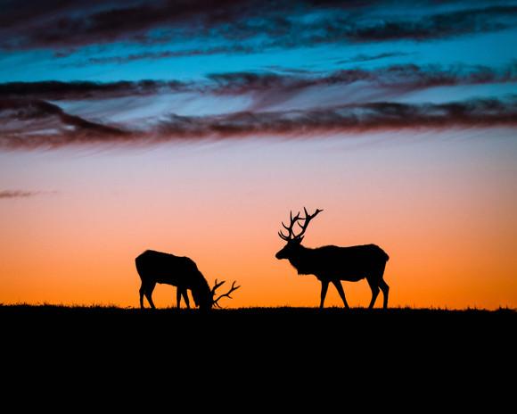 Point Reyes Elk-9189.jpg