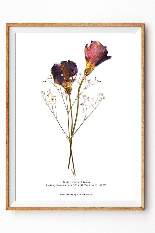 Stedmoder blomstermix