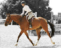 "In the marked for ""horses for sale"". Pretty, talented hunter and equitation horses for the american market. We find the best for you - for a price you wont believe."