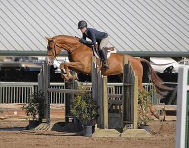 """Many of the horse we have sold to the States through time, is today still to see in the show pen and some of them are gone into """"memory lane"""". Like Strapless - the world famous hunter horse, portrayed by Breyer."""