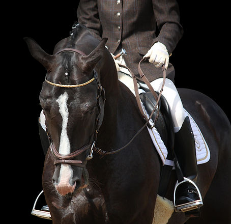Dressage horses for sale for the rider who wish to be at the top. We like them pretty, talented and well educated. How do you want af dressage horse? Contact Skovrider International and get the right one next time you are looking for a horse to take the 1th place.