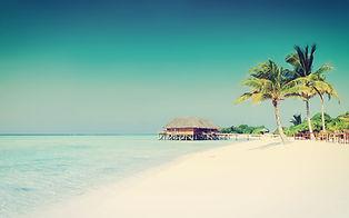 Vanorel Paradis tropical