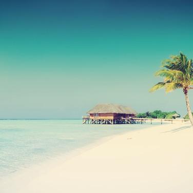 Paraíso tropical com Palmeiras