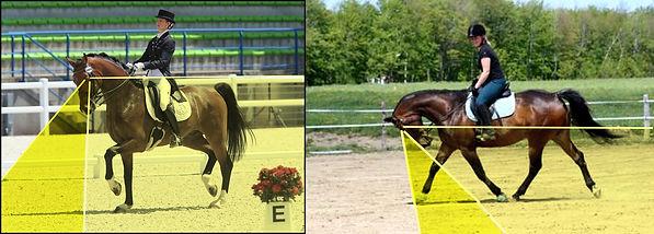 champ de vision cheval alizée froment encapuchonné tête dans le poitrail zone visuelle chevaux