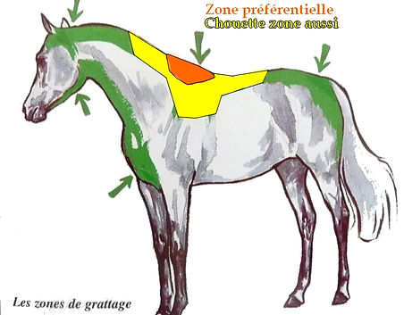 zone gratter cheval allo gromming caresses chevaux