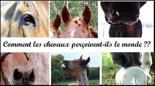 perception monde chevaux monde sensoriel cheval sens vue odorat toucher goût vision vue ouïe