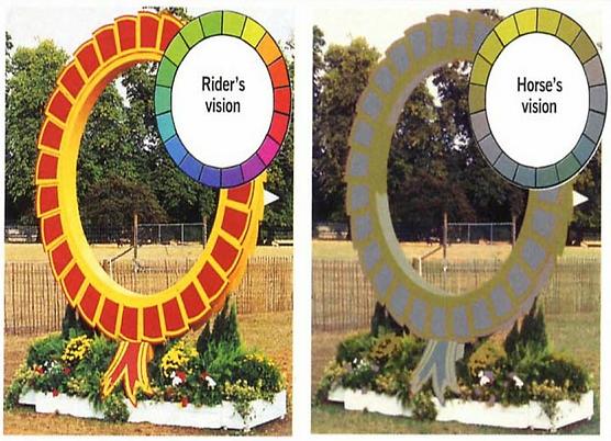 vision cheval vue couleurs ethologie équitation savoir