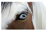 produits-chevaux-oeil-cheval.jpg