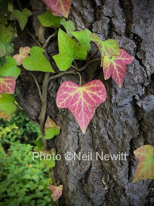 Autumn Creek Walk, Clunes