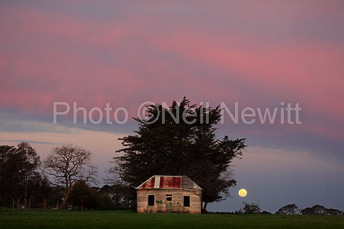 Moon Rise, Kingston