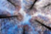 tree-tops-2991743_640.jpg