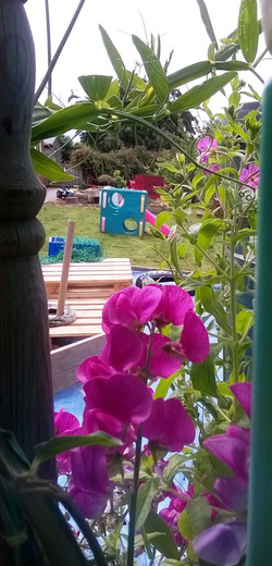 View from the Wendy house window
