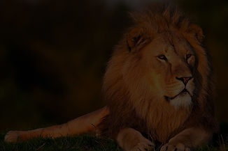lion-794962_1280_edited.jpg