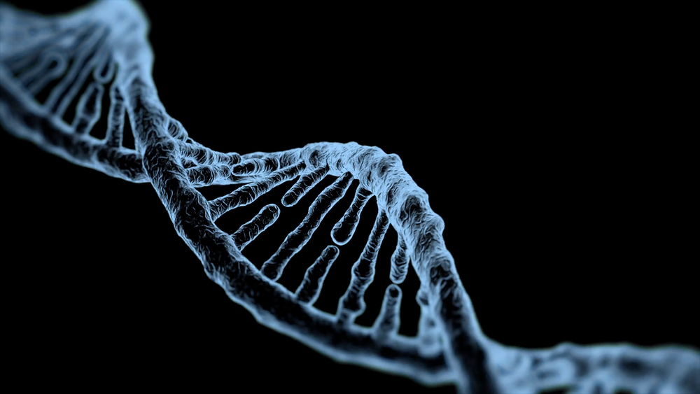 Genetics may be to blame for obesity in the US, HealFast