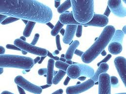 Probiotics After Surgery - A Stronger Recovery