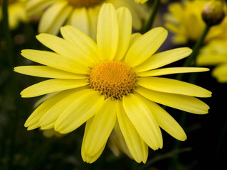 Considering Using Arnica? Read this first.